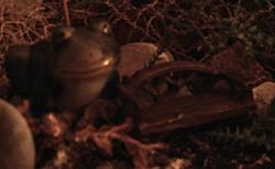 giant-frog