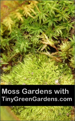 my-little-moss-garden