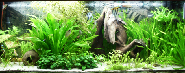 aquarium, a type of vivarium