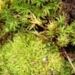 Buying Moss