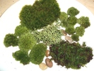 Live Moss Assortment by Eileen