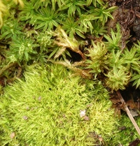 A Guide To Buying Moss From Tiny Green Gardens Tiny Green Gardens
