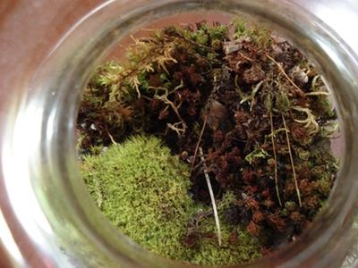 my-moss-garden-2