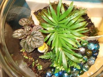 planted-terrarium