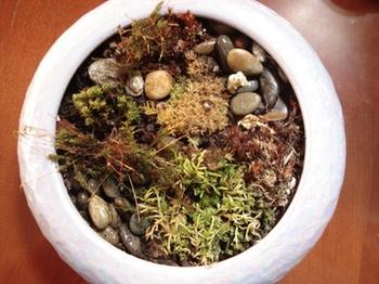 purple-moss-garden