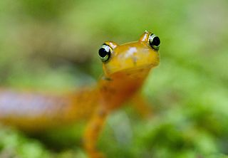 salamanders are often kept in habitats called herpariums