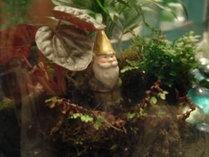 terrarium-and-gnome