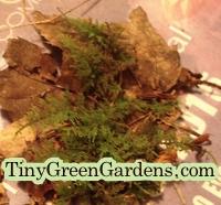 fresh-fern-moss