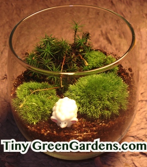 moss garden in a glass