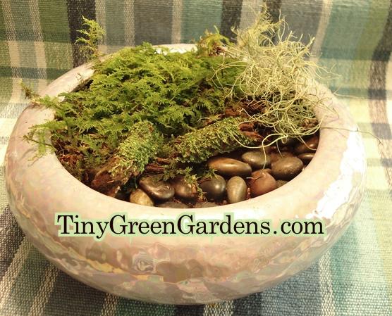 moss-garden-1