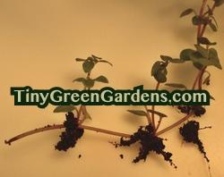 propagating