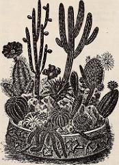 succulent-dish-garden