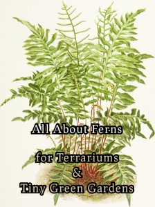 all-about-ferns